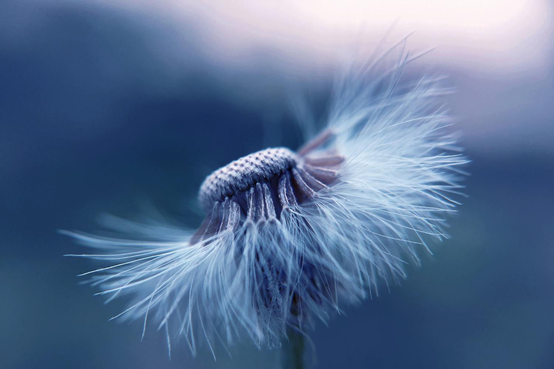 Leadership Whisperer - Soft Skills